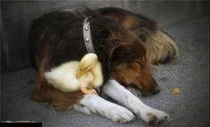 amazing love, amazing animal, amazing animal friendships