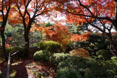 秋の等々力渓谷日本庭園 世田谷区野毛(Noge in Setagaya-ku) | by setagayatoieba