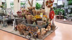 Eigentijdse winkelopstelling van droogbloemen