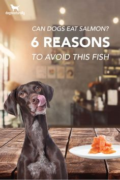 Salmon is advertised as being full of nutrients for your dog. And it's true. But it also has a lot of bad things in it too. Salmon are exposed to dangerous toxins ... and they can contain parasites that could make your dog sick. Here are 6 reasons why you need to leave salmon out of your dog's bowl.
