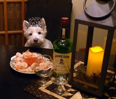 A romantic New Year's Eve.  The perfect date, a Westie.