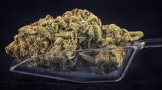 Wo ist welche Art von  Cannabiskonsum legal? - Die meisten Cannabisliebhaber in Österreich, Deutschland und der Schweiz werden sich früher oder später über die Illegalität ihres Hobbys bewusst. Dah... Cannabis Edibles, Cannabis Oil, Cbd Oil For Sale, Online Pharmacy, Buy Weed Online, Medical Marijuana, Herbs, High Times, Ganja