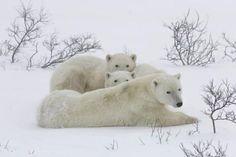 Defenders Photo Contest 2013 Winners | Defenders of Wildlife