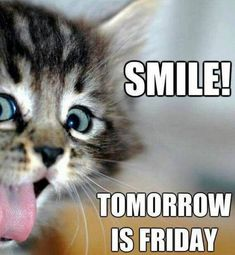 Positive funny morning quotes funny good morning quotes sayings 2 inspirational funny morning quotes . Thursday Meme, Happy Thursday Quotes, Its Friday Quotes, Friday Memes, Thursday Greetings, Happy Tuesday, Good Morning Thursday, Cute Good Morning, Morning Memes