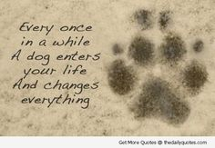 Google Image Result for http://www.michelleshemilt.com/wp-content/uploads/2013/05/dog-quotes-1.jpg