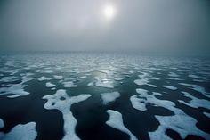 Арктика и Антарктика Пола Никлена  (Paul Nicklen) | traveleisure natur beaut art