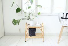 Decorar con plantas : via MIBLOG