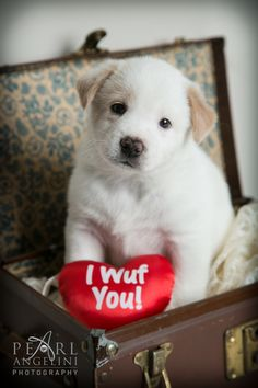 "I ""Wuf"" You #ManitobaMutts #Puppies"