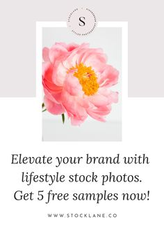 Stocklane styled stock photography is your premier resource for editorial style . Photography Website, Food Photography, Lifestyle Photography, Creative Business, Business Tips, Digital Marketing, Email Marketing, Brand Board, Instagram Tips