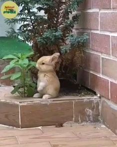 Cute Little Animals, Cute Funny Animals, Cute Cats, Big Cats, Cute Animal Videos, Cute Bunny, Bunny Rabbit, Cute Creatures, Animals And Pets