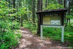 A simple trail at Lake Easton State Park, WA.