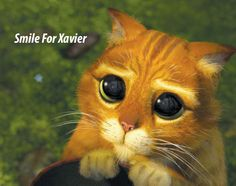 Smile For Xavier: Puss In Boots