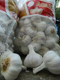 The Garlic Gurus at Seeds from Italy give you the scoop on growing your own garlic. This post answers questions of when and where to grow garlic, what varieties to grow, how much to grow, where to buy garlic, and how much to plant.data-pin-do= Herb Garden, Lawn And Garden, Vegetable Garden, Garden Plants, Garden Tips, Planting Garlic, Mother Earth News, Fall Plants, Grow Garlic