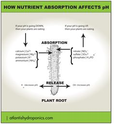 How Nutrient Absorption Affects pH