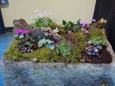 Alpine trough garden