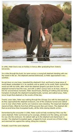 Unbelievable Story... Elephants are my favorite animals, but this story is too funny not to share