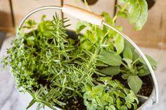 easy indoor herb container garden #indoorherbgardeneasy