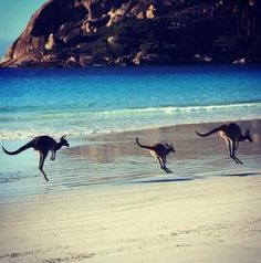 Australia beaches I need to visit Australia bucket list