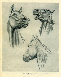Horse drawing в 2019 г. horse drawings, pencil drawings of animals и hors. Horse Drawing Tutorial, Horse Pencil Drawing, Pencil Drawings Of Animals, Horse Drawings, Animal Sketches, Art Sketches, Art Drawings, Drawing Art, Pencil Art