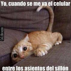 Cualquier parecido es pura coincidencia. #telefono #sillon #gato #celular #pet #Mascota #SrElMatador #ElSalvador