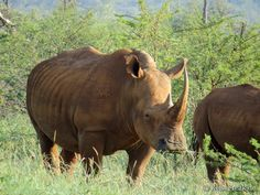 Über Instagram hier eingefügt NEU! #Ebook http://ift.tt/2b9uNnZ - #Safari  #malariafrei  #Wildreservate in #südafrika  #southafrica #malariafree #gamereserves #wb1001rb #wbesaesa @jacislodges @pilanesberg_  @rhulani_lodge #wbpinsa @south_africa_through_my_eyes @samara_karoo  #afrika #africa #travelblogger #germanbloggers #safarilodge #feelthebush #luxurysafari @mongenalodge #urlaub