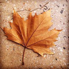Goodbye Autumn, I'll miss your sunshine & rain & wind (actually no, I won't miss your wind) 😘 here's to a wild Winter 💙❄️💙#goodbyeautumn #shoplocal #shopbendigo #lyttletonterrace #australianmade #fairtrade #naturalfibres #lovetheseasons