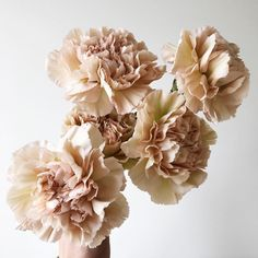 Jumping on the carnation love train b/c these antiqued varieties are too hard to resist ✨🍂 Beautiful Bouquet Of Flowers, Beautiful Red Roses, Types Of Flowers, Exotic Flowers, Bouquet Flowers, Rose Flowers, Purple Flowers, Design Floral, Floral Wedding