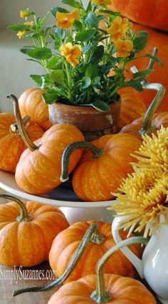 pumpkins and pansies....