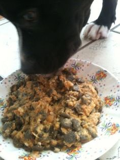 Homemade dog food recipes meat loaf meat and homemade how to make healthy homemade dog food for dogs with food allergies forumfinder Images