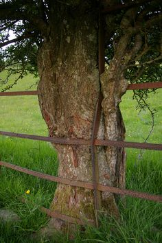 tree eating fence | Flickr - Photo Sharing!