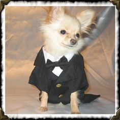 haha---Nice for that walk down the aisle.  How many dogs?