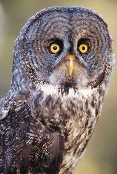 Image of: Eagle Owl Preschool Craft On Nocturnal Animals Owl Crafts Preschool Crafts Preschool Ideas Nocturnal Animals Pinterest 184 Best Nocturnal Animals Preschool Theme Images Nocturnal