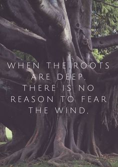 When the roots are deep there is no reason to fear the wind. #quote