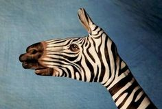 Handimals: Hands Painted Like Animals | Incredible Things