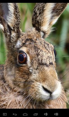 Hare. March Hare, Rabbits, Moon, Art, Animales, Beauty, The Moon, Art Background, Bunnies
