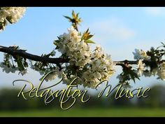 Requiem Mass in D Minor Wolfgang Amadeus Mozart's final Masterpiece was commissioned in mid 1791 by the Austrian count Franz Von Walsegg, as a Tribute to the...