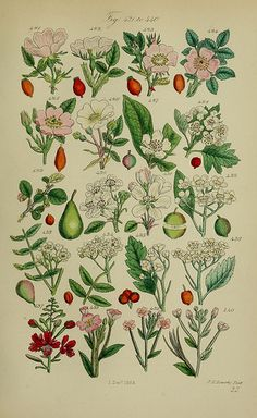 British wild flowers.. London,J. Van Voorst,1876..
