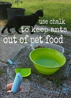 dicas-para-donos-de-gatos Desenhe um círculo em torno do pote de ração do seu animal com giz para manter as formigas longe  Aparentemente, as formigas não conseguem ultrapassar o traçado de giz