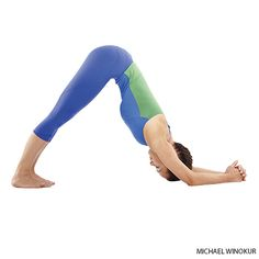 dolphin dog pose - Google Search