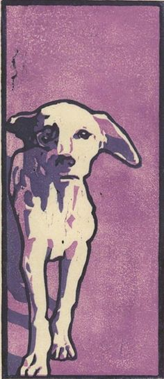 Purple Dog.