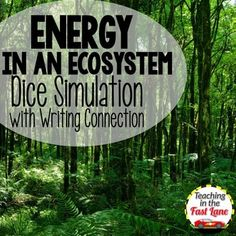 Energy in an Ecosystem Dice Simulation with Writing Connection-- perfect activity for food chains!! $