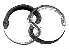 These infinity symbols are just what your tattoo collection is missing. Some people even get tattoos to remember a certain experience. To give you a dose of inspiration and ideas, I'm going to share with you 21 best ouroboros tattoos. Tattoo Designs, Design Tattoo, Skeleton Tattoos, Skeleton Bones, Oroboros Tattoo, Schulter Tattoo, Snake Art, Snake Drawing, Mystique