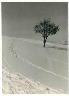 L ALBERO SOLITARIO.LONE TREE.Foto d Epoca Old Photo 1930 Vintage Paesaggio F247