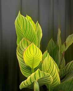 Leaves of Light Amazing Pictures Photo Print by Michael Taggart Photography flower green gold