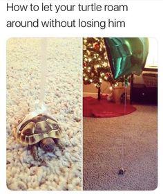 He'll fly away!