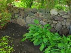 stone fence in the shade garden as a border to separate from the rest of the bush