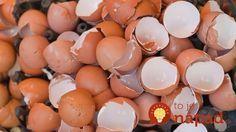 Rozbiť, využiť obsah a odhodiť. To je bežná s schéma, akou narábame s vajíčkami. Je to však chyba a my vám povieme prečo!