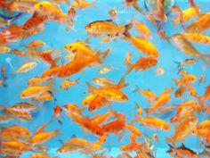 orange and blue inspiration