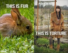 Fur looks better on animals. Follow our FREE lesson plan to help your students understand how their clothing choices affect animals: http://peta.vg/1tw9. #LessonPlan #Animals #FurFree #Vegan #HumaneEducation