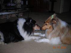 Chance and Sadie
